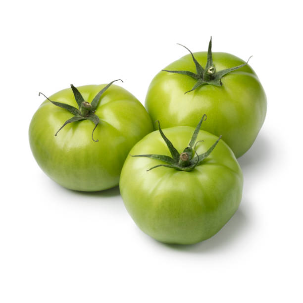 Three green unripe tomatoes stock photo