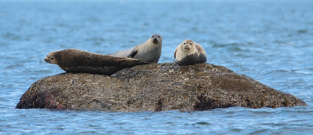 Seals resting on rock surrounded by blue water