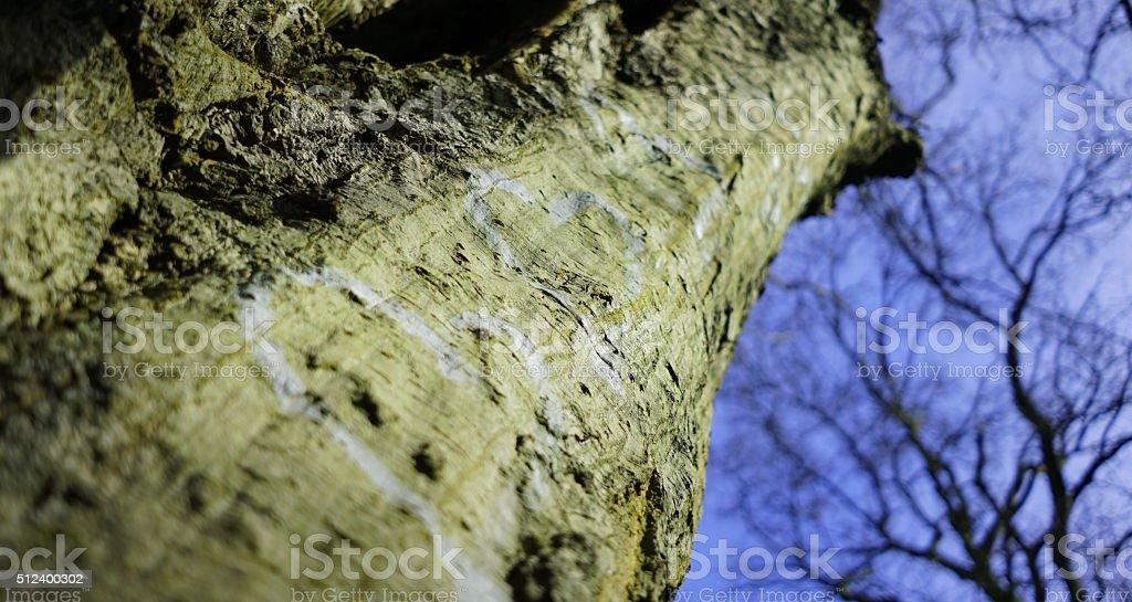 Three heart tree stock photo