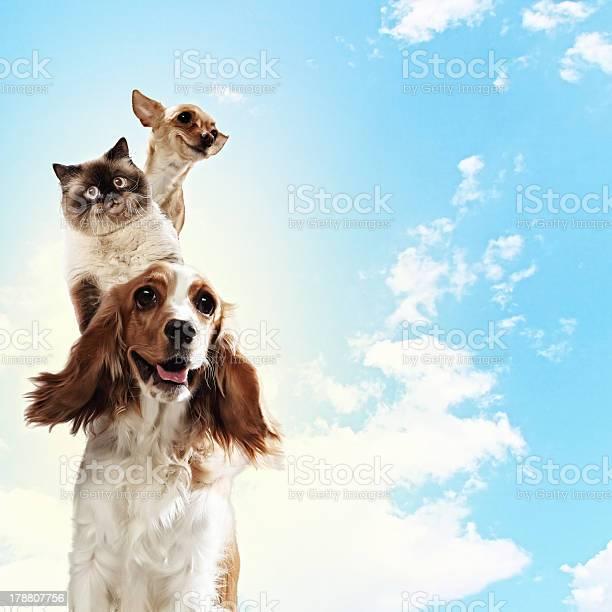 Three home pets picture id178807756?b=1&k=6&m=178807756&s=612x612&h=hib0dqiwvztptwsxkm spvkzcz8fzdiaziao49quuyg=