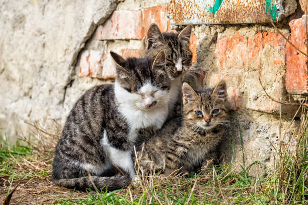 Three homeless kittens huddle together while sitting by the wall stock photo