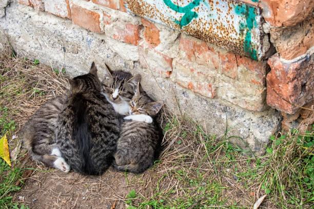Three homeless kittens hugged and doze stock photo