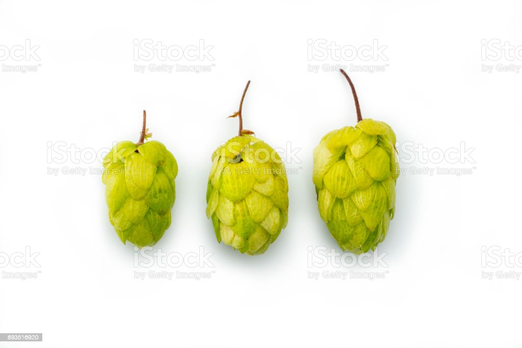 three Hops flower seed cone Isolated on a white background - stock photo