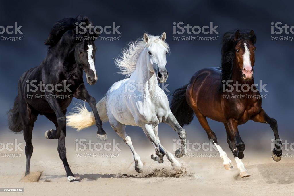 Three horse run stock photo