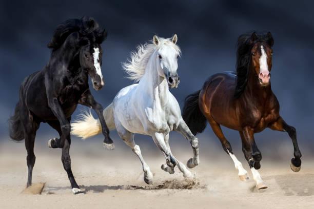 drei pferd laufen - andalusier pferd stock-fotos und bilder