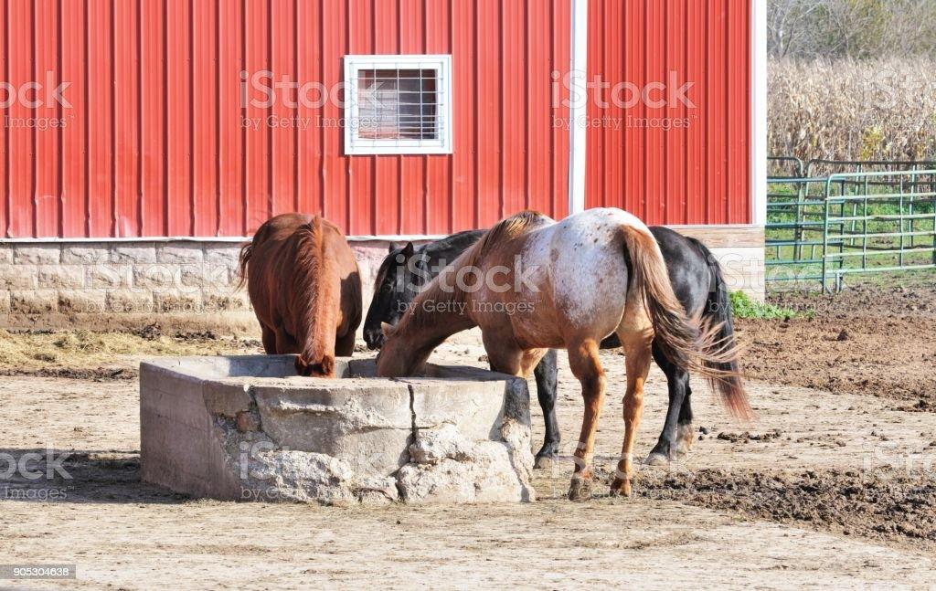 Three Horses at Feeder stock photo