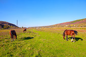 Three horses grazing on the sunny meadow