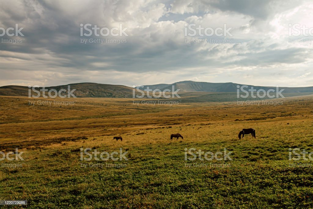 Three Horses In Mountain Valley Stock Photo - Download ...