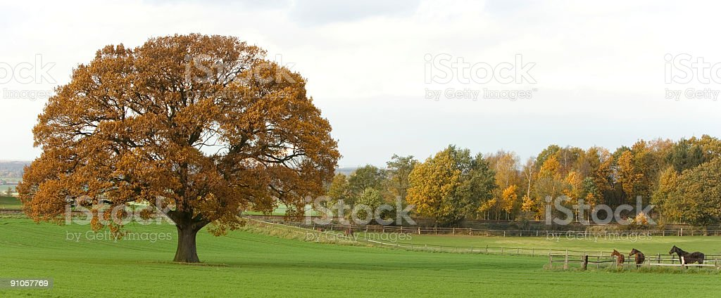 Three horses on pasture and big oak tree in autumn royalty-free stock photo