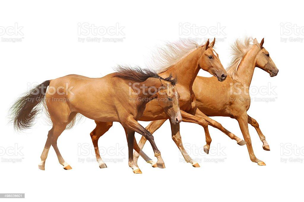 three horses on white stock photo
