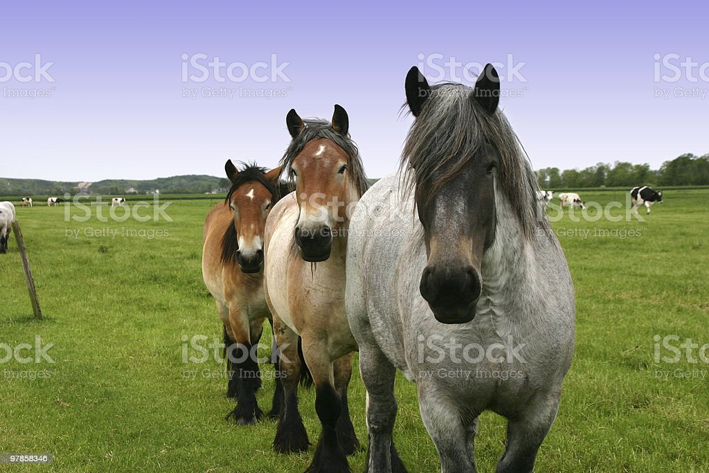 three horses stock photo