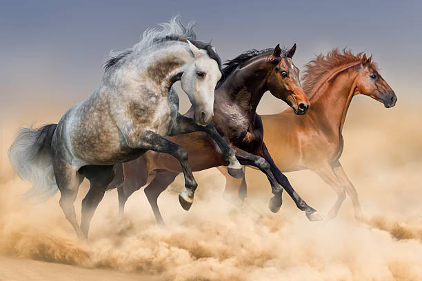 Three horses run stock photo
