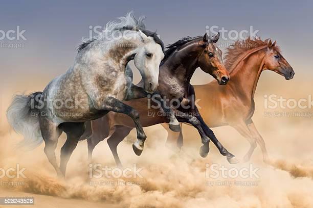 Three horses run gallop in dust