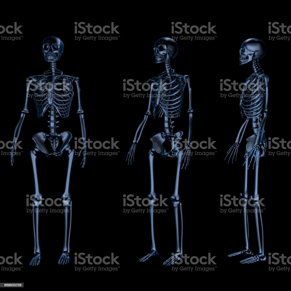 Three human skeletons over black stock photo