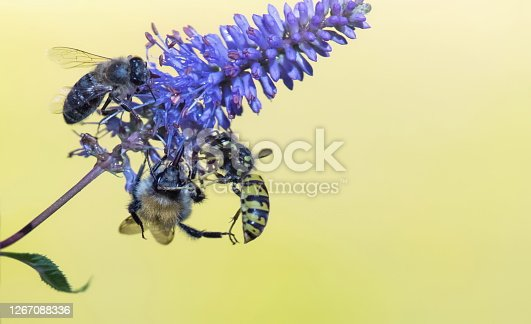 Bumble bee and wasp on autumn anemone,Eifel,Germany.\nPlease see more similar pictures of my Portfolio.\nThank you!