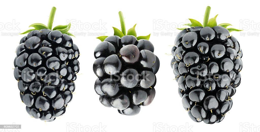 Three isolated blackberries stock photo