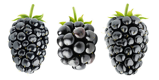 Three isolated blackberries Isolated blackberries. Three various blackberry fruits isolated on white background with clipping path blackberry fruit stock pictures, royalty-free photos & images