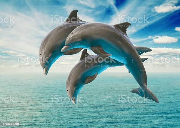 Three jumping dolphins picture id470633098?b=1&k=6&m=470633098&s=612x612&h=u8tcrfpss38zeum5fcx9ud1e a xve8wa z ovduj0k=