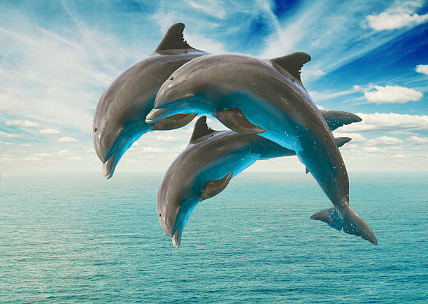 three  jumping dolphins three jumping dolphins, seascape with deep  ocean  waters and cloudscape dolphin stock pictures, royalty-free photos & images