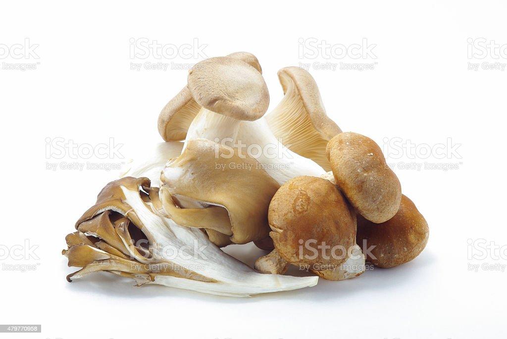 Three kinds of mushrooms stock photo