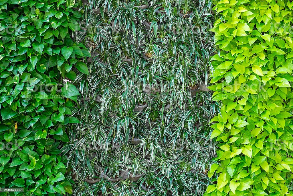 Three kinds of plant on wall as background royalty-free stock photo
