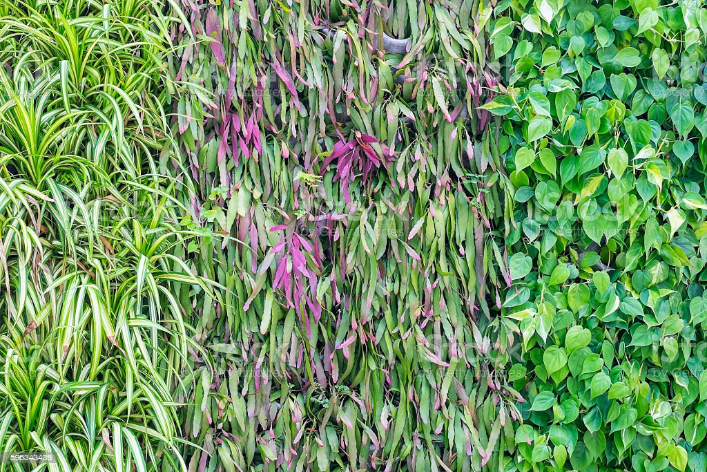 Three kinds of plant on wall as background Lizenzfreies stock-foto