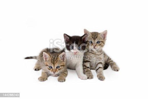 543560840 istock photo three kitten brothers (5 weeks)  144288243