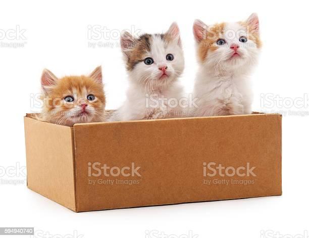 Three kittens in a box picture id594940740?b=1&k=6&m=594940740&s=612x612&h=qzhtyhloxw9nnfuv  qk6osgrjjnrccwceereomhjbw=