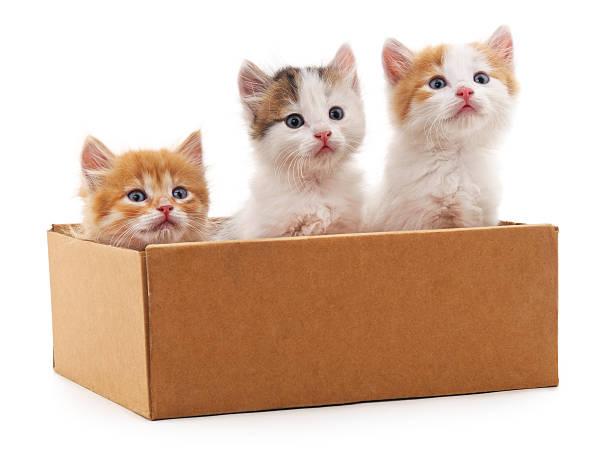 Three kittens in a box picture id594940740?b=1&k=6&m=594940740&s=612x612&w=0&h= lcpwmptuiwurwr2sovom4keg0fqtiqdouqcpcmgksi=
