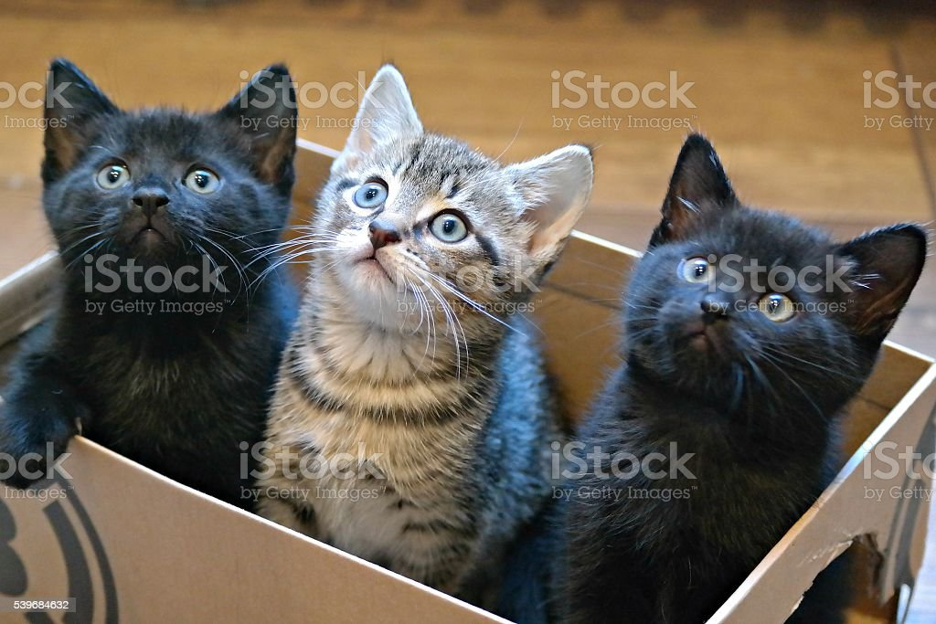Three Kittens in a Cardboard Box stock photo
