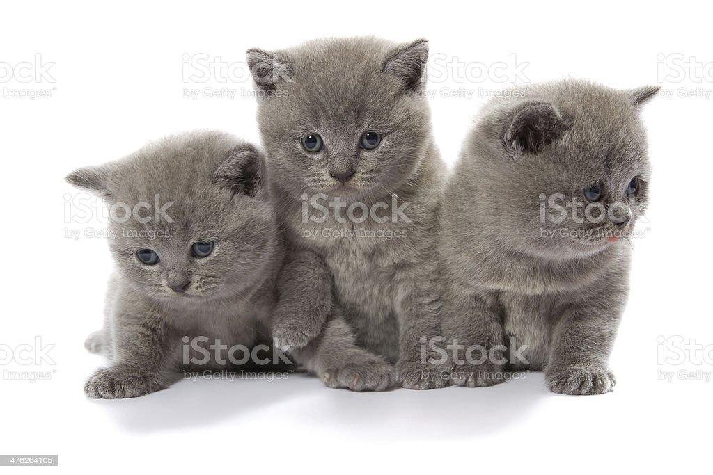 three kittens stock photo