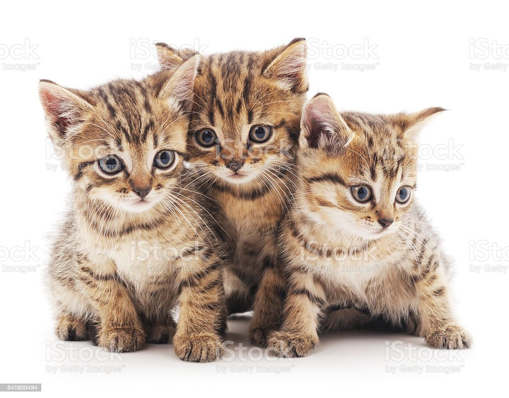 Three kittens. stock photo