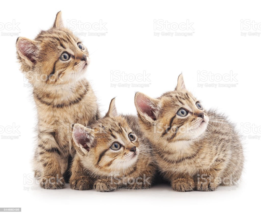 Three kittens. - foto de stock