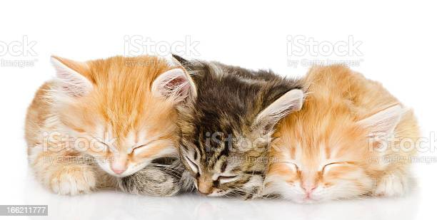 Three kittens sleep together picture id166211777?b=1&k=6&m=166211777&s=612x612&h=uv8fwuhovfudbug k8qv6vplxysk7jaxfgifkgp8x40=