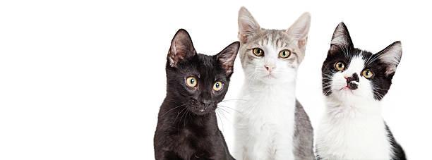 Three kittens together social media banner picture id584211928?b=1&k=6&m=584211928&s=612x612&w=0&h=yvwalvysp6xdiwxtqc u 7tkm4pdo1 uaek4sxg9ssa=