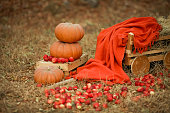 istock Three large orange pumpkins and red apples scattered on the yellow grass 1207046914