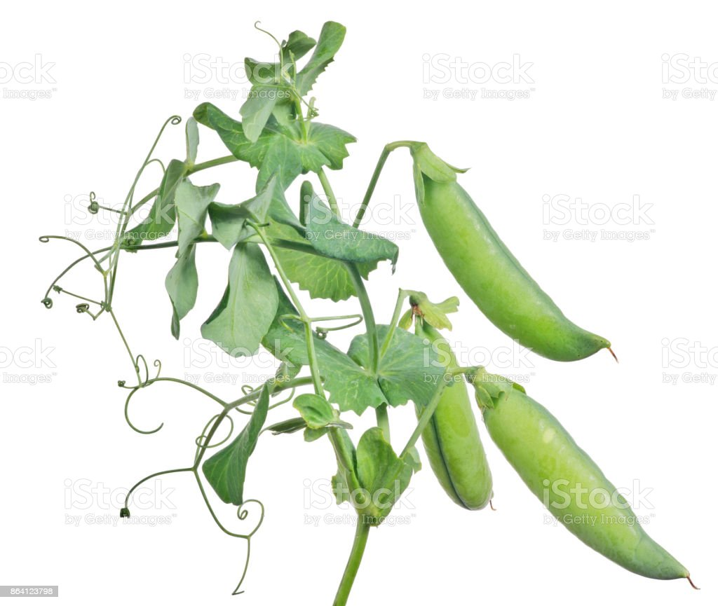 three large pea pods with green leaves on white royalty-free stock photo