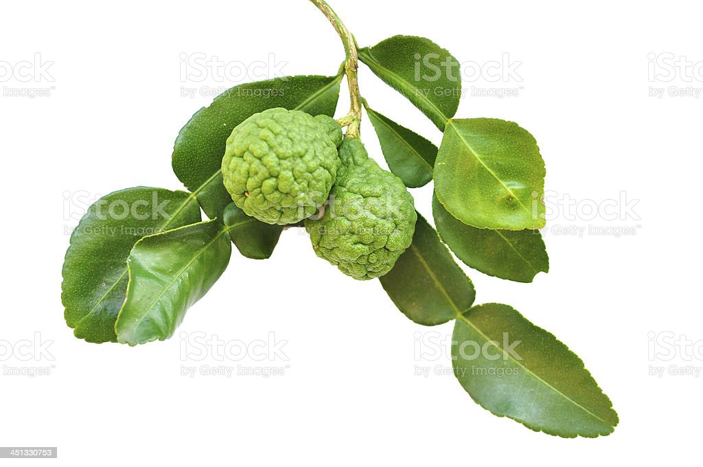Three leech lime fruits stock photo