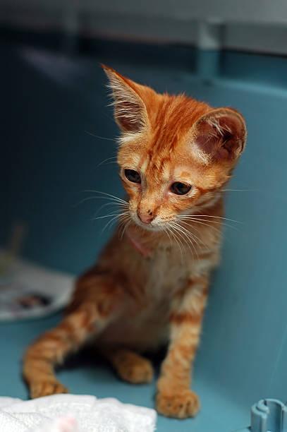 Three Legged Kitten stock photo