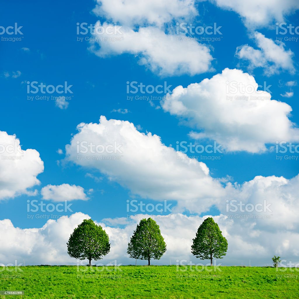 Three Linden Trees in Spring Field Landscape under Blue Sky stock photo