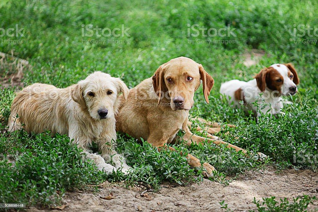 Three little dogs stock photo
