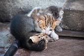Three little kittens crawling and having fun at backyard compound