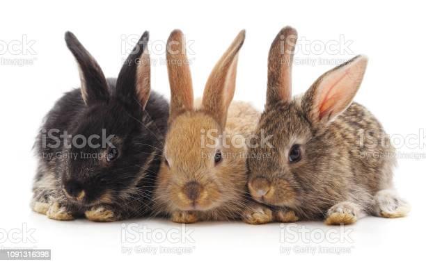 Three little rabbits picture id1091316398?b=1&k=6&m=1091316398&s=612x612&h=vfxot gqhingbygvgakkirj 4r6g9k8frqvrqz iexm=