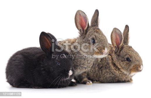 istock Three little rabbits. 1214981123