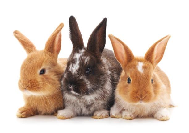 Drei kleine Kaninchen. – Foto