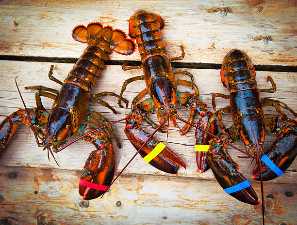 Three Lobsters stock photo