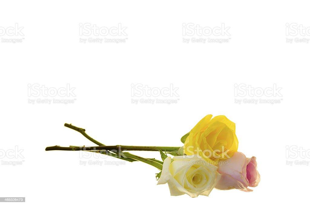 Three Long-stem Roses stock photo