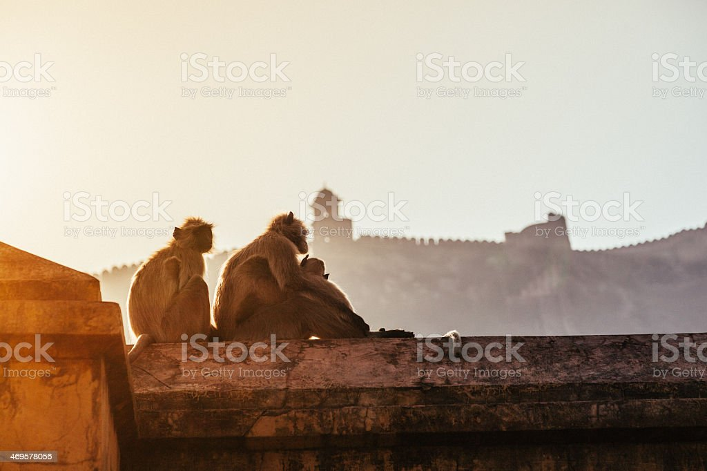 Three macaques stock photo