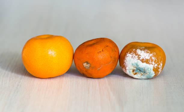乾く段階で 3 つのみかん。新鮮なマンダリン、悪化し、開始し、金型で甘やかさ腐ったミカン。期限切れ fruitt - 腐敗 ストックフォトと画像