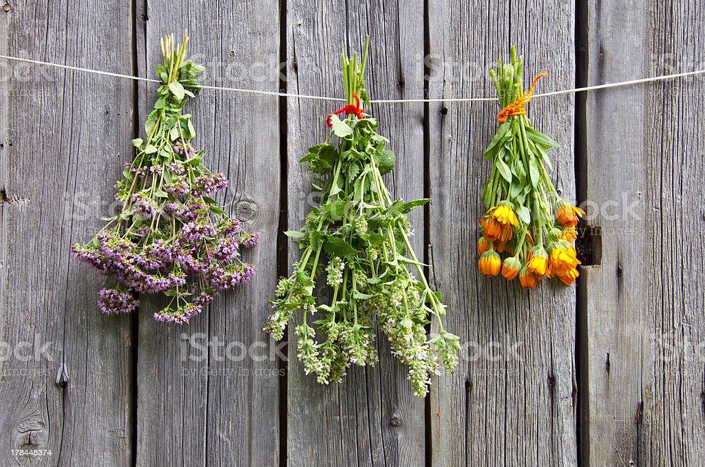 three medical herbs bunch on old wooden farm wall